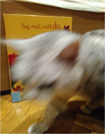 wie-gross-die-welt-cat1