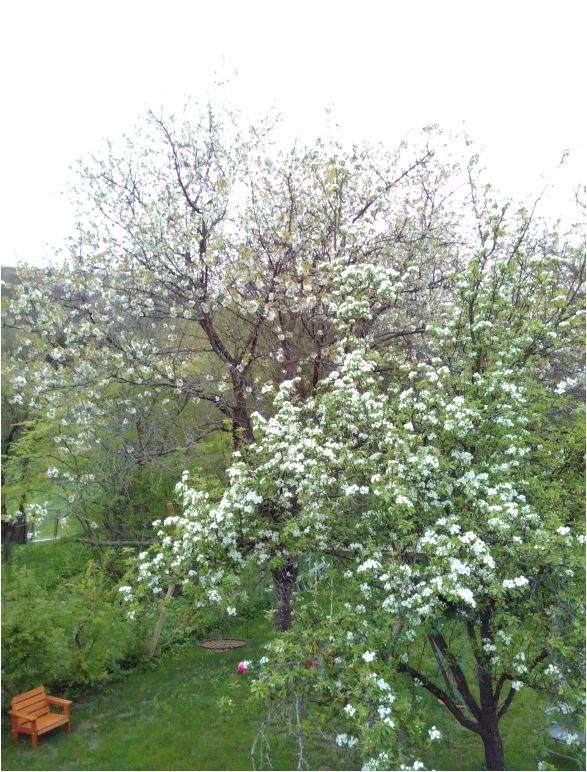 april-baumschnee3a