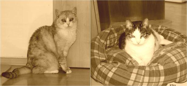 zweikatzensep