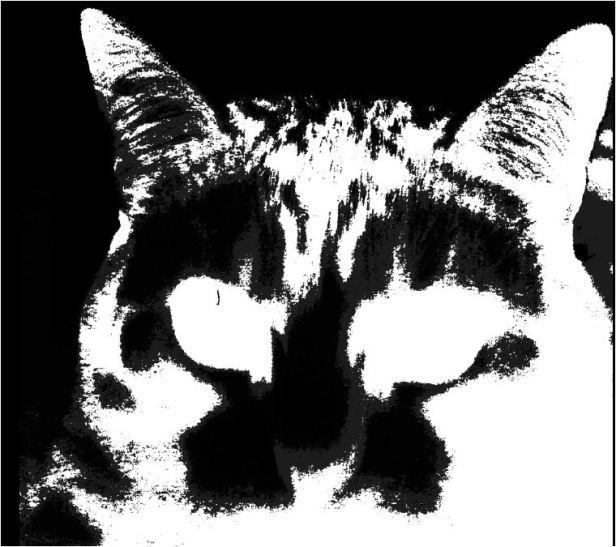 bw-cat
